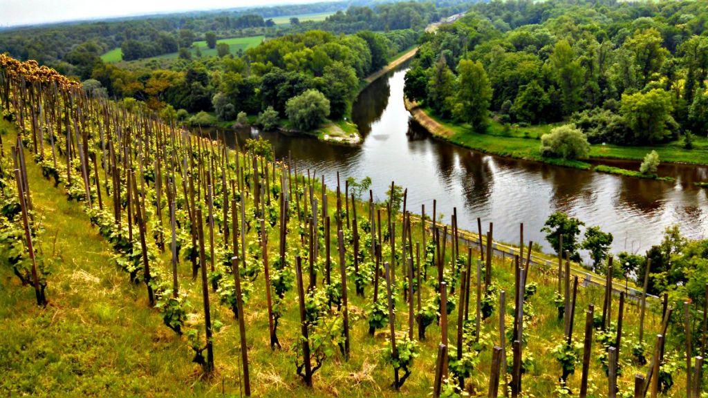 Знаменитые мельницкие виноградники.