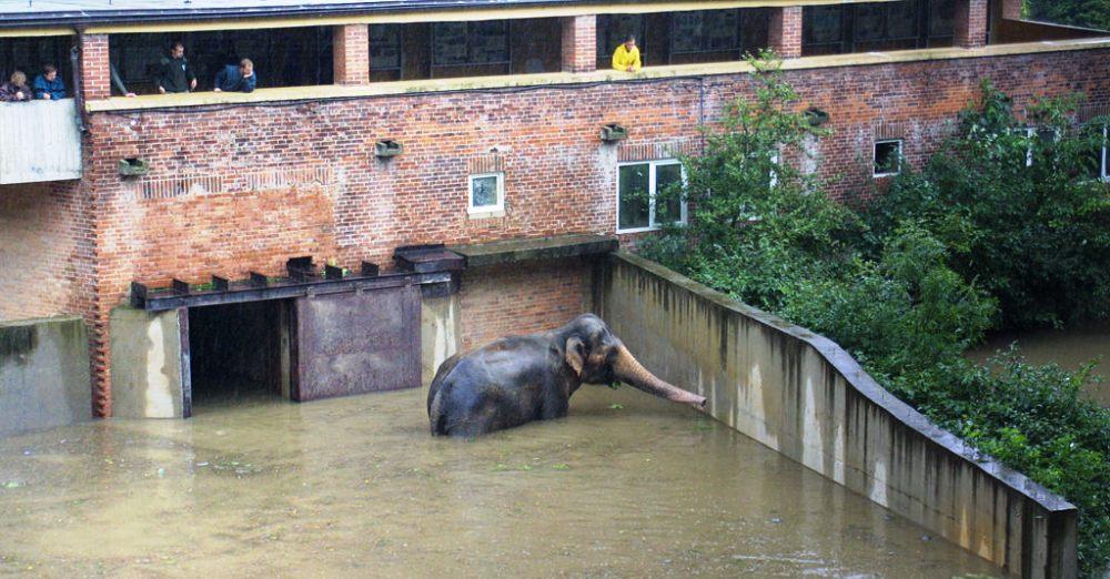 Наводнение в Пражском зоопарке, 2002 год.